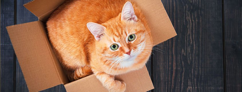 Orange-cat-in-a-box
