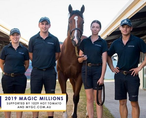 MM Yearling Sale Day 3