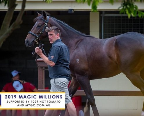 MM Yearling Sale Day1
