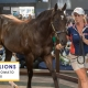 MM Yearling Sale Day2