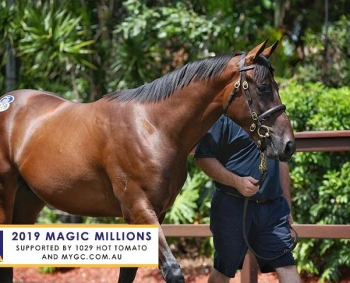 Magic Millions Yearling Sale Day2