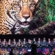 National Geographic – Symphony For Our World