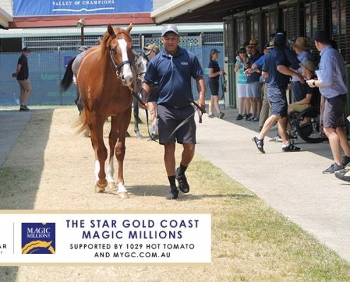 2020 Magic Millions Gold Coast Yearling Sale - Day 2